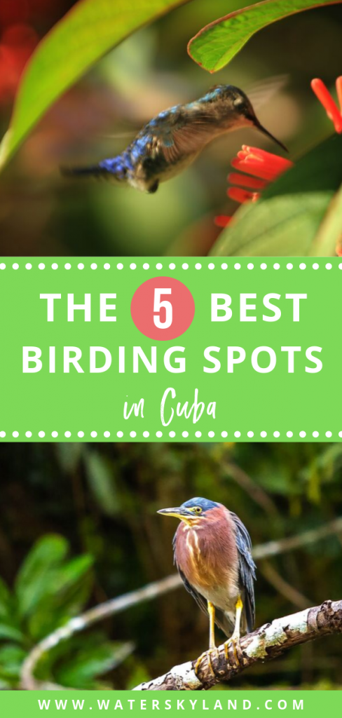 Cuban bird watching locations draw people to this island and those with the patience will find it a rewarding and unforgettable activity. So here are the 5 best birding in Cuba you absolutely don't want to miss. #birding #cuba #cubanbirds #outdoors #birds #exoticbirds