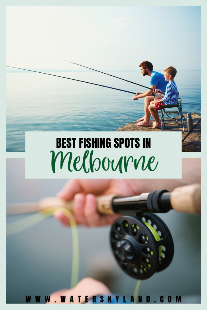 Here in Australia, you'll find plenty of creeks, rivers, beaches, and rock pools, all offering various species of fish. So we've compiled a list of the 7 best fishing spots in Melbourne to help you out on your next fishing trip so you can catch your own trout! #fishing #melbourne #australia #outdoors #fishingtools #fish #camping #wildlife